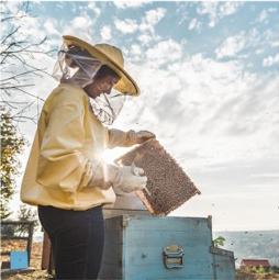 Martina Bigi apicoltrice